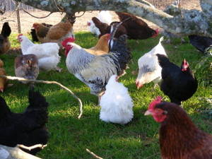 Poultry_convention